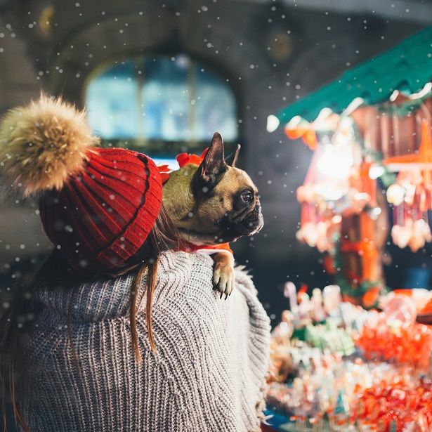 How Can I Keep My French Bulldog Warm?
