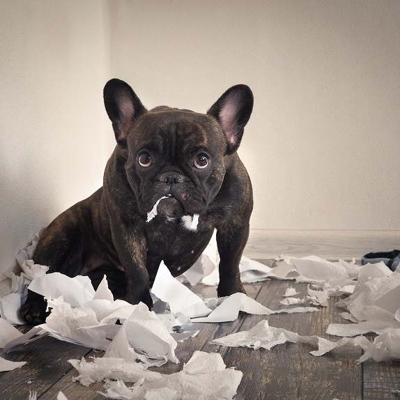 Can French Bulldogs Be Left Alone?