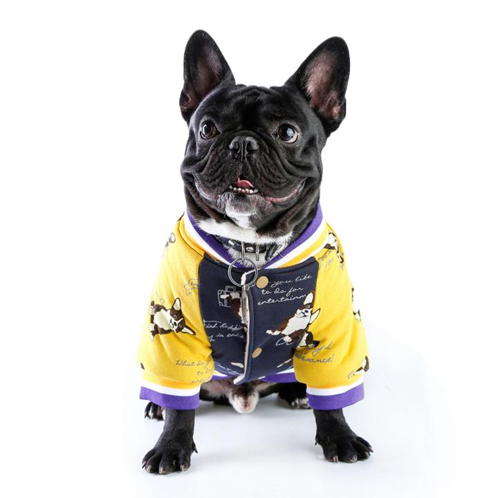 Do French Bulldogs Need Jackets?